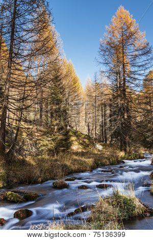 River In The Forest, Autumn Season Of Devero Alp
