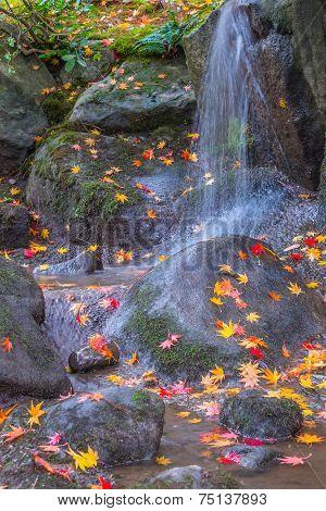 Waterfall Fallen Autumn Leaves