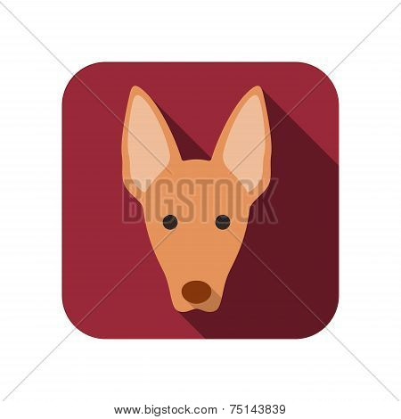 Pharaoh hound animal flat icon