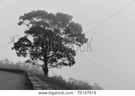 Alone tree in fog - Shenandoah National Park, VA