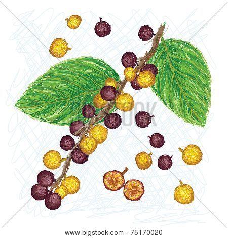 Dye Fig