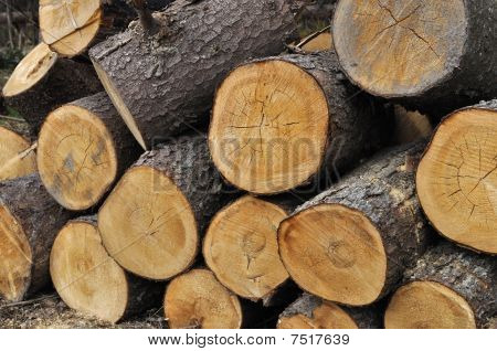 Stack Of Coniferous Chocks