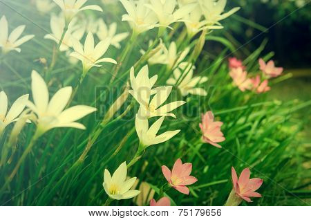 pink and white flowers vintage background nature
