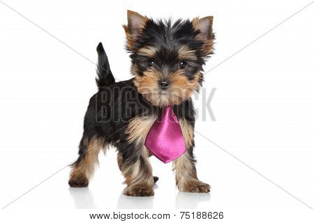 Yorkshire Terrier Puppy In A Pink Tie