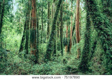 Parque Nacional Chiloe