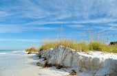 picture of sea oats  - Beautiful Sand Dunes and Sea Oats on the Coastline of Anna Maria Island Florida - JPG