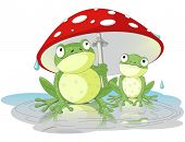 picture of agar  - Two frogs are hiding from the rain under the fly - JPG