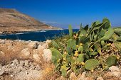picture of nopal  - Mediterranean landscape with Opuntia cactus - JPG