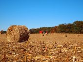 image of corn stalk  - Round bales of dried corn stalks in a field after the harvest with a red tractor in the background.