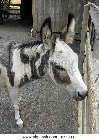 Flirty Palomino Donkey