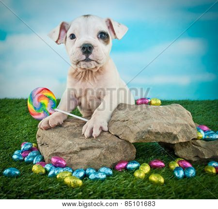 Easter Bulldog Puppy