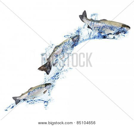Fresh fishes in water wave, isolated on white
