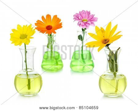 Collage of different flowers in glass test-tubes, isolated on white