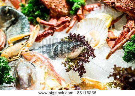variety of fresh seafood on ice at the market