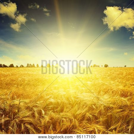 Beautiful sunrise over a field of wheat