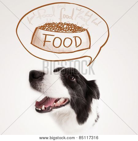 Cute black and white border collie thinking about a bowl of food in a thought bubble above her head