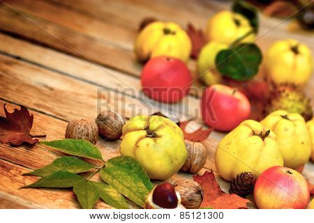 Organic quince (apple quince)  and apples