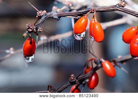 Drops Of Water On The Berries