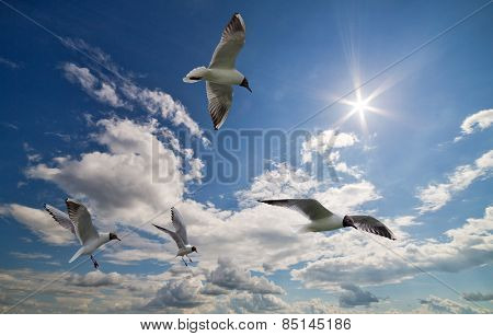 photo of four gulls in sky with clouds and bright sun
