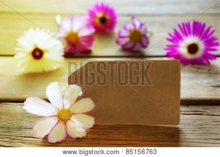 Empty Sunny Label With Copy Space With Cosmea Blossoms