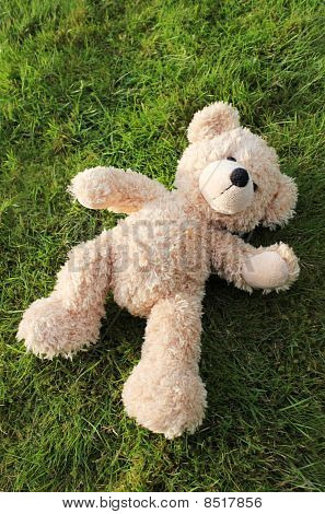 Teddy Bear On Grass Background