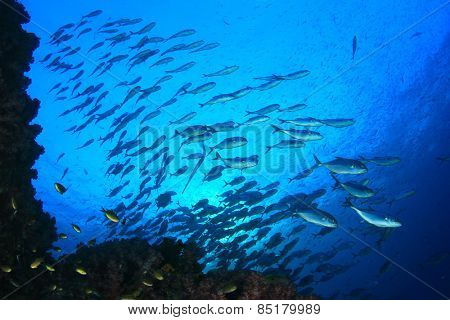 Coral Reef and school of Bigeye Trevally fish