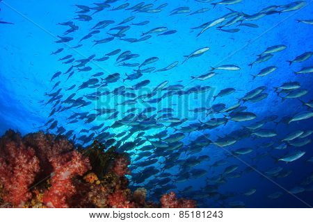 Coral reef and Bigeye Trevally fish