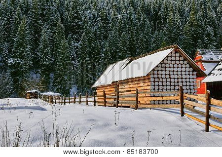 Shed and Snowy Pines