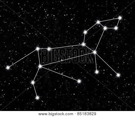 constellation Leo against the starry sky