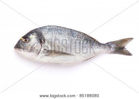 Fresh dorado fish. Isolated on white background