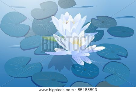 Lily flowers on water surface. EPS 10 format.