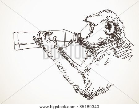 Sketch of monkey drinking water Hand drawn vector illustration