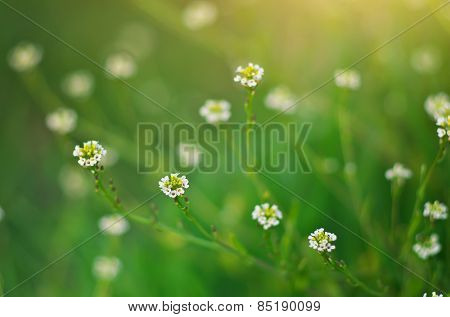 Spring flower. Element of design.