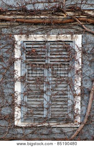BAD ISCHL, AUSTRIA - DECEMBER 14: Ivy growing across a window shutter of a building in Bad Ischl, Austria on December 14, 2014.