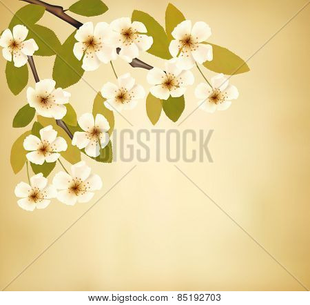 Vintage background with blossoming tree brunch and white flowers.