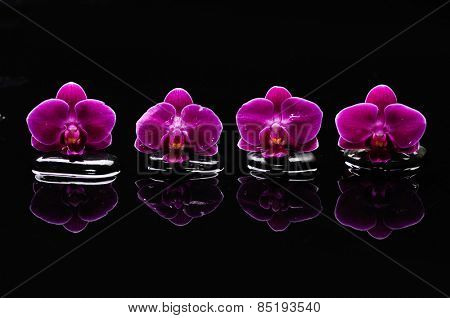 Four orchid with therapy stones