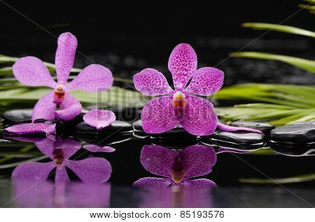 Two pink orchid with therapy stones