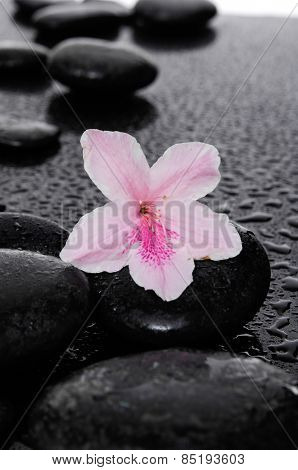 Set of Cherry blossom, sakura flowers with therapy stones