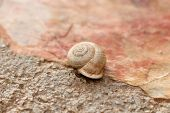 picture of snail-shell  - Snail  - JPG