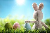 picture of easter eggs bunny  - Sugar rabbit and easter eggs on meadow - JPG