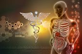 pic of midsagittal  - human anatomy and caduceus sign in color background - JPG