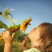 stock photo of sunflower  - Happy boy with sunflower outdoors - JPG