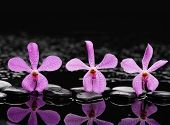 pic of three life  - Still life with three pink orchid with therapy stones  - JPG