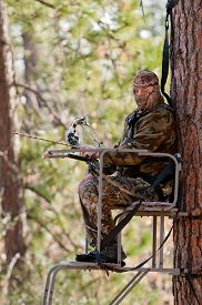 picture of hunter  - Bow hunter in a ladder style tree stand  - JPG