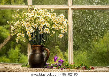 Chamomiles On The Window Sill In A Sunny Rainy Day