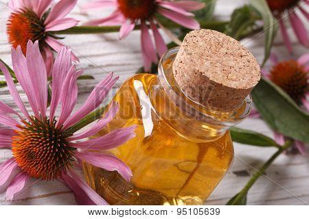 Fragrant Essence Of Echinacea Purpurea Closeup Horizontal
