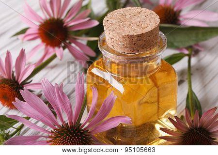 Essence Of Echinacea Purpurea Macro In A Glass Bottle
