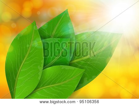Green Leaves On Bokeh Background