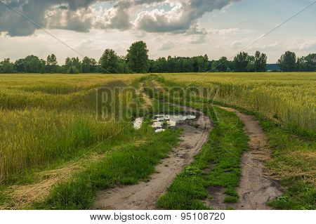 Evening landscape with road between wheat fields