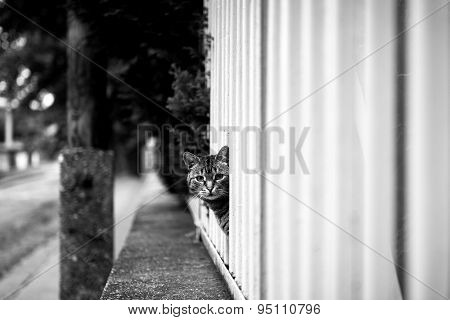 Abandoned cat outdoors